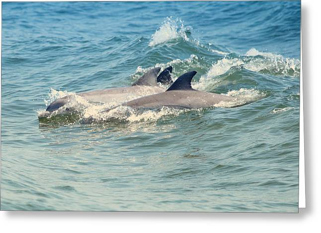 Acrobat Image Greeting Cards - Dolphin trio Greeting Card by Pete Federico