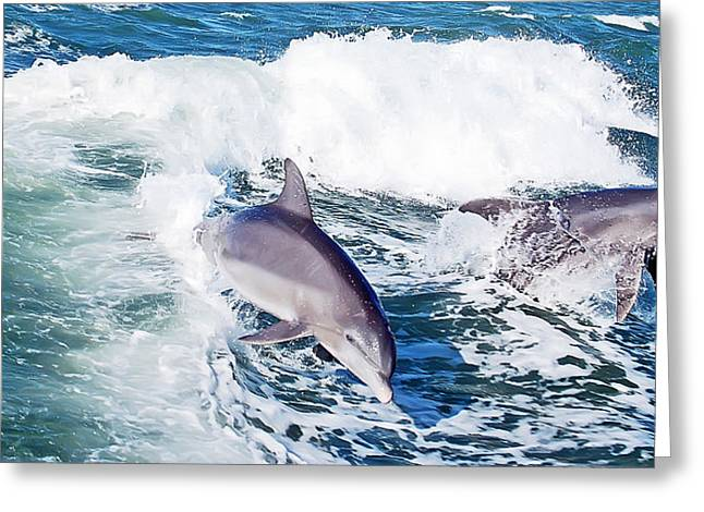 Ocean Mammals Greeting Cards - Dolphins Jumping Greeting Card by Aimee L Maher Photography and Art