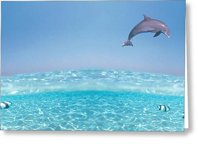 Dolphins Leaping In Air Greeting Card by Panoramic Images