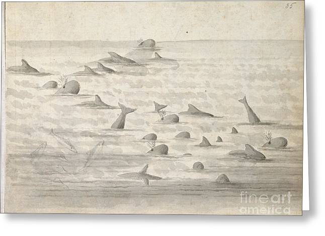 Captain America Greeting Cards - Dolphins Near Rio De Janeiro Greeting Card by British Library