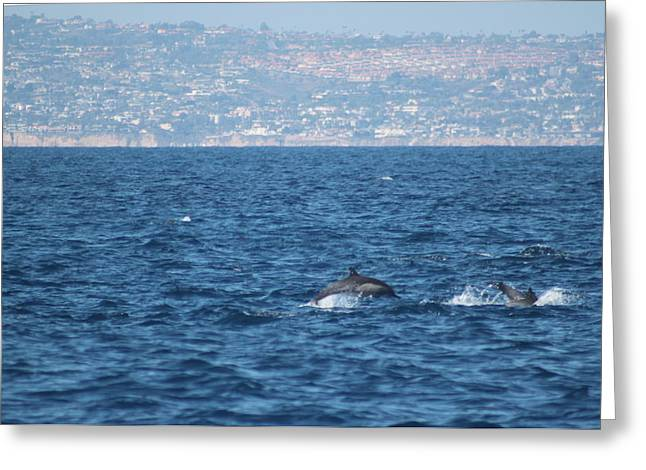 Valerie Broesch Greeting Cards - Dolphins Off the San Diego Coast Greeting Card by Valerie Broesch