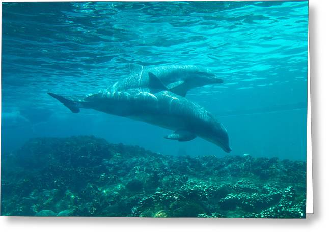 Dolphin Art Print Greeting Cards - Dolphins Swimming Underwater Greeting Card by Stephanie McDowell
