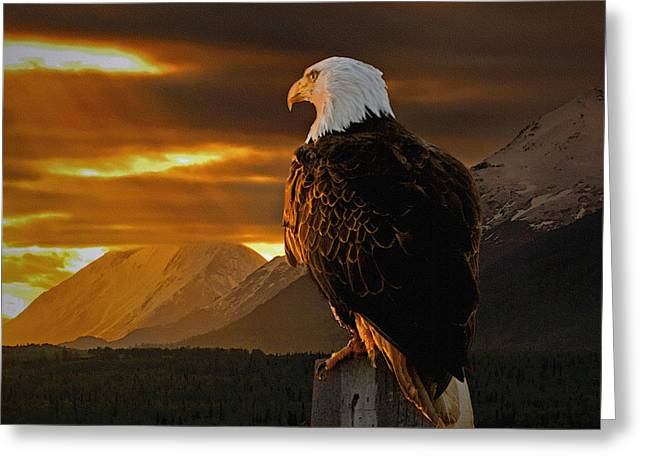 Eagles Greeting Cards - Domain Greeting Card by Ron Day