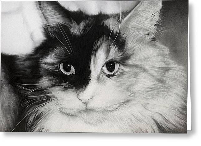 Soft Drawings Greeting Cards - Domestic Cat Greeting Card by Natasha Denger