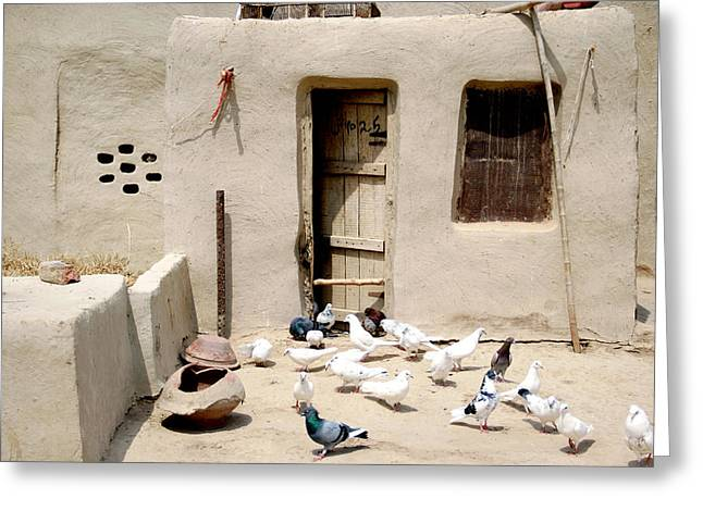 Sahiwal Greeting Cards - Domestic Pigeons in Mud House Greeting Card by Iftikhar Ahmed