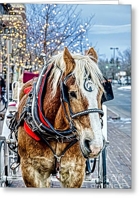 Fort Collins Greeting Cards - Donald 2 Greeting Card by Baywest Imaging