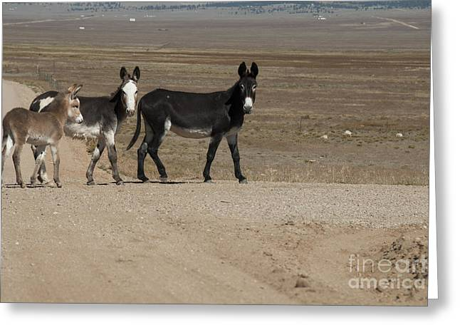 Hoofs Greeting Cards - Donkey Family Greeting Card by Juli Scalzi