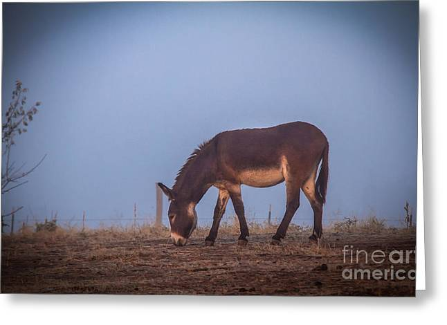 Donkey In The Fog Greeting Card by Robert Bales