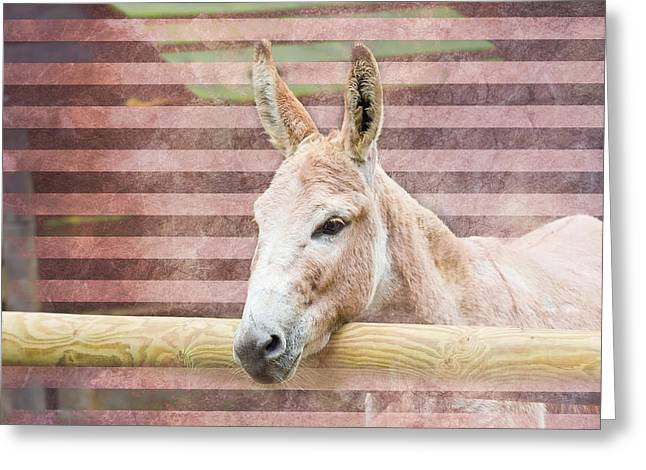 Expressiveness Greeting Cards - Donkey Greeting Card by Pati Photography