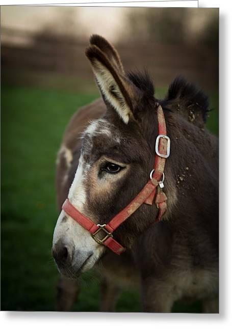 Donkey Greeting Cards - Donkey Greeting Card by Shane Holsclaw