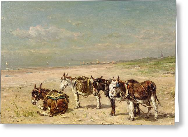 On The Beach Greeting Cards - Donkeys on the Beach Greeting Card by Johannes Hubertus Leonardus de Haas