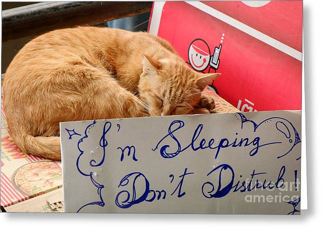 Cat Sleeping Greeting Cards - Dont Disturb - Sleeping Cat Greeting Card by Dean Harte