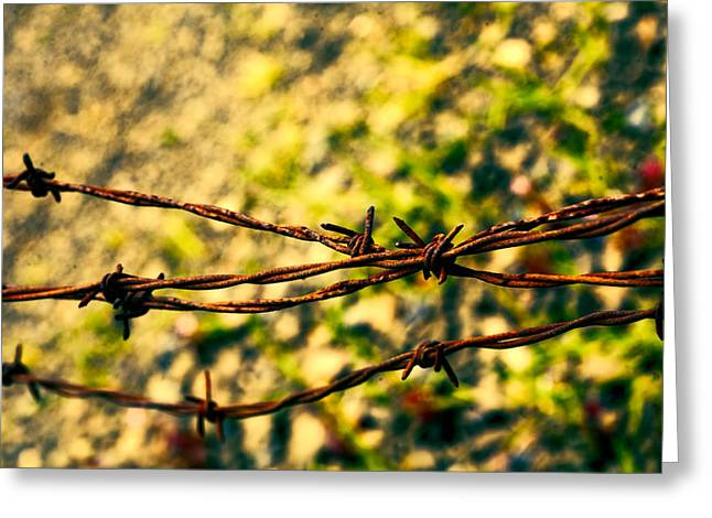Barbed Wire Fences Greeting Cards - Dont Fence Me In Greeting Card by Bonnie Bruno