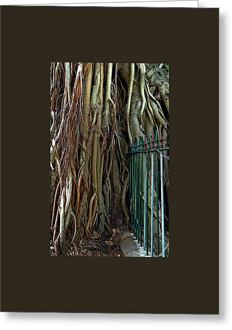 Tree Roots Greeting Cards - Dont Fence Me In. Greeting Card by Denise Clark