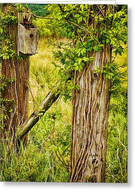 Tennessee Farm Digital Greeting Cards - Dont Fence Me In Greeting Card by Priscilla Burgers