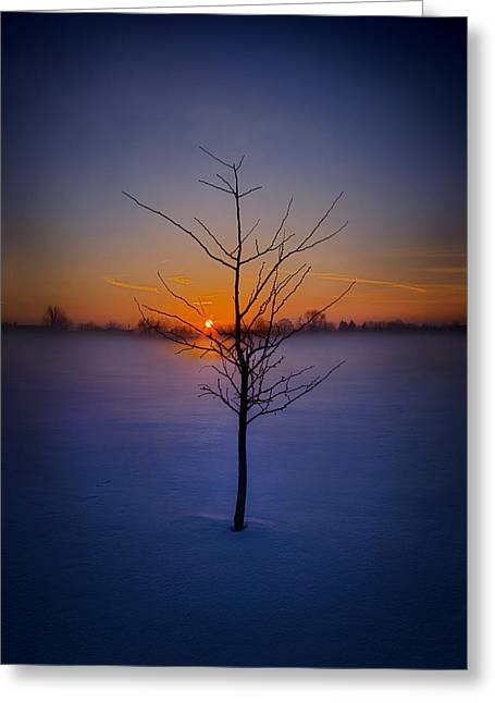 Geographic Greeting Cards - Dont Give Up On Me Greeting Card by Phil Koch