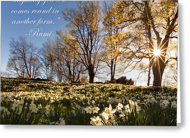 Daffodil Greeting Cards - Dont Grieve Greeting Card by Bill  Wakeley