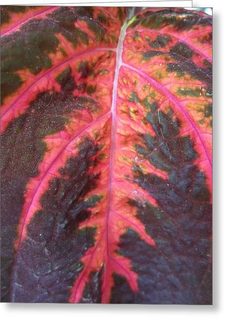 Flower Closeups Greeting Cards - Dont Leaf Me Greeting Card by Mike Podhorzer