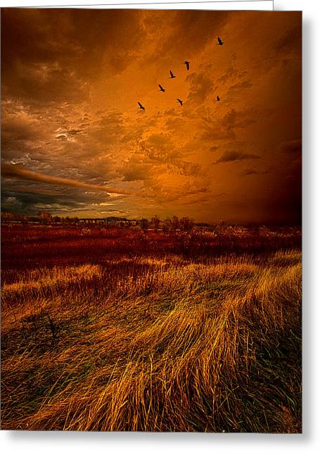 Fall Photographs Greeting Cards - Dont Let Go Greeting Card by Phil Koch