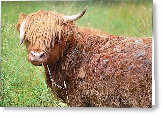 Steer Greeting Cards - Dont Mess With Texas Greeting Card by Bill Cannon