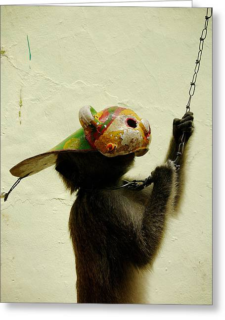 Performing Monkey Greeting Cards - Performing Monkey - Jakarta Greeting Card by Ubud High