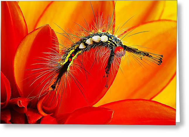 Beauty Mark Greeting Cards - Dont Touch Greeting Card by Bill Caldwell -        ABeautifulSky Photography