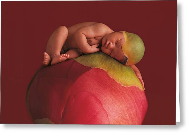 Petal Greeting Cards - Donte on Peony Greeting Card by Anne Geddes