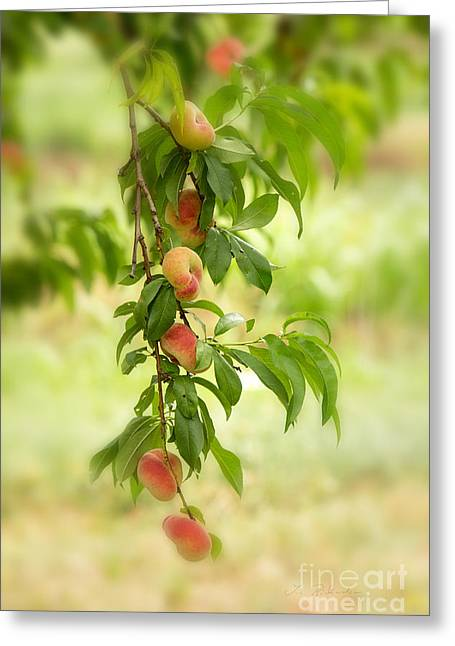 Fruit Tree Art Greeting Cards - Donut Peaches Greeting Card by Iris Richardson