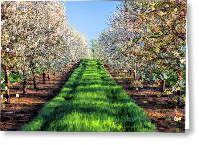 Cherry Blossoms Paintings Greeting Cards - Door County Cherry Blossoms Row Greeting Card by Christopher Arndt