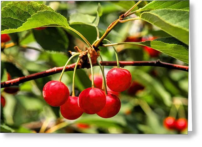 Door County Greeting Cards - Door County Cherry Hanging Cherries Greeting Card by Christopher Arndt