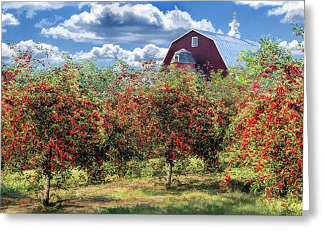 Door County Cherry Harvest And Red Barn Panorama Greeting Card by Christopher Arndt