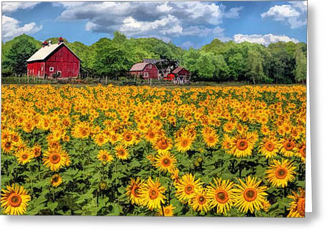 Farm Fields Paintings Greeting Cards - Door County Field of Sunflowers Panorama Greeting Card by Christopher Arndt