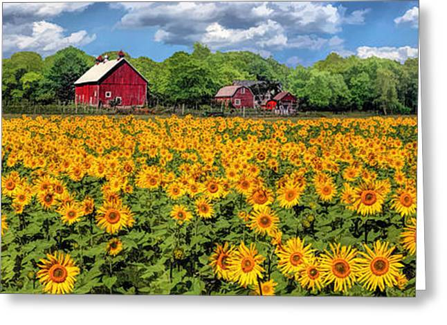 Door County Greeting Cards - Door County Field of Sunflowers Panorama Greeting Card by Christopher Arndt