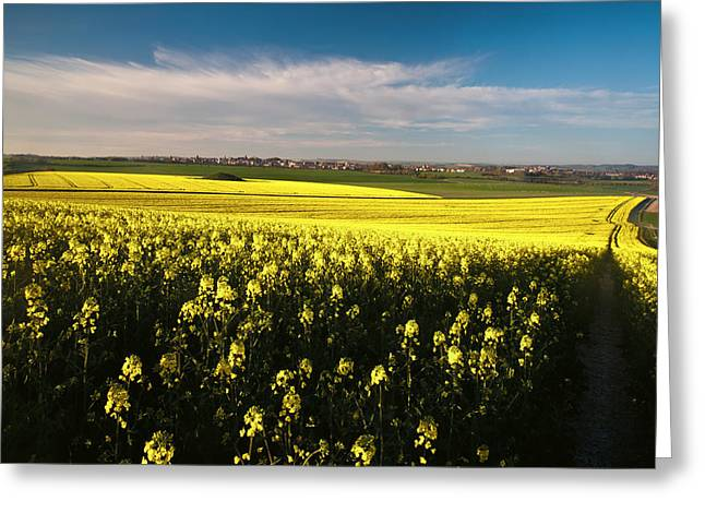 Dorchester Rape Seed  Greeting Card by Daniel  Bristow