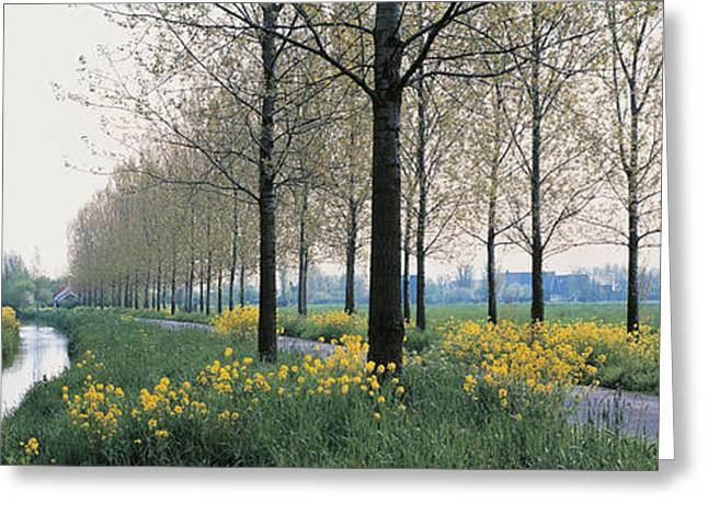 Gray Sky Greeting Cards - Dordrecht Holland Netherlands Greeting Card by Panoramic Images
