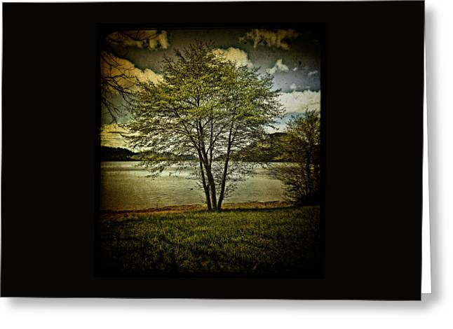 Gift Ideas For Her Greeting Cards - The Tree At Dorena Lake Greeting Card by Thom Zehrfeld