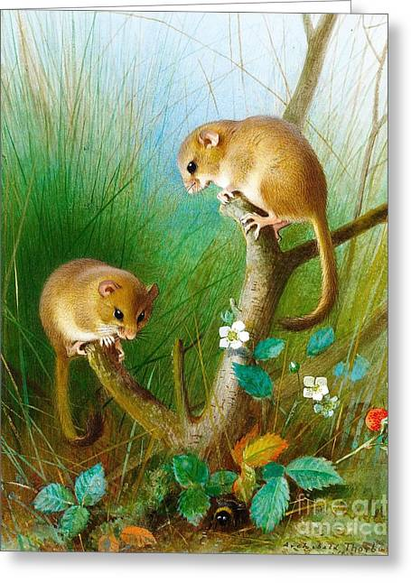 Dormouse Greeting Cards - Dormice Greeting Card by Pg Reproductions