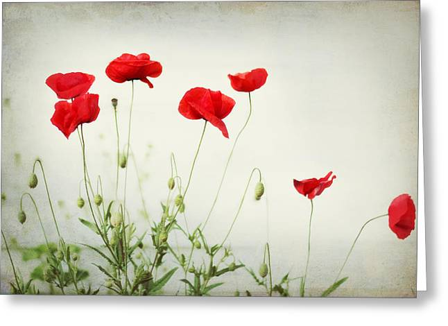 Poppies Prints Greeting Cards - Dorothy Greeting Card by Amy Tyler