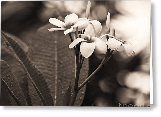 Michelle Greeting Cards - Dots Frangipani Greeting Card by Michelle Wiarda