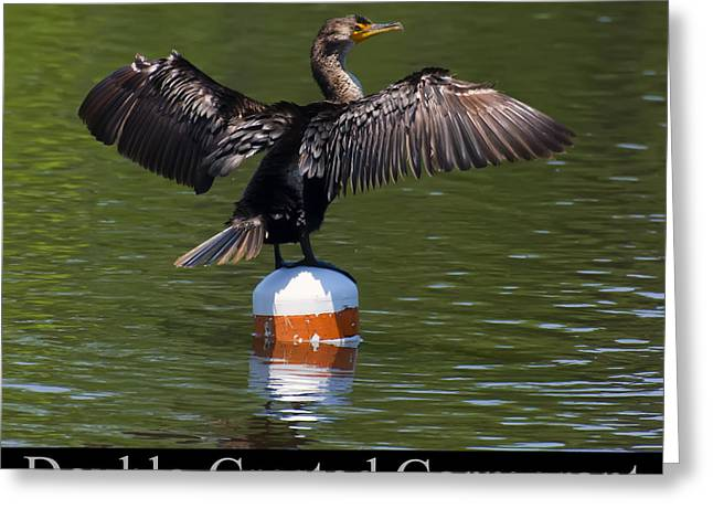 Phalacrocorax Auritus Greeting Cards - Double Crested Cormorant Greeting Card by Chris Flees