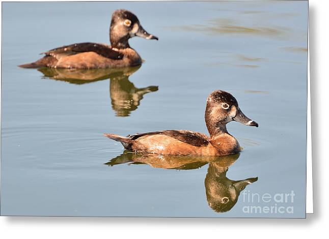 Cooperation Greeting Cards - Double Ducks Greeting Card by Jim Chamberlain