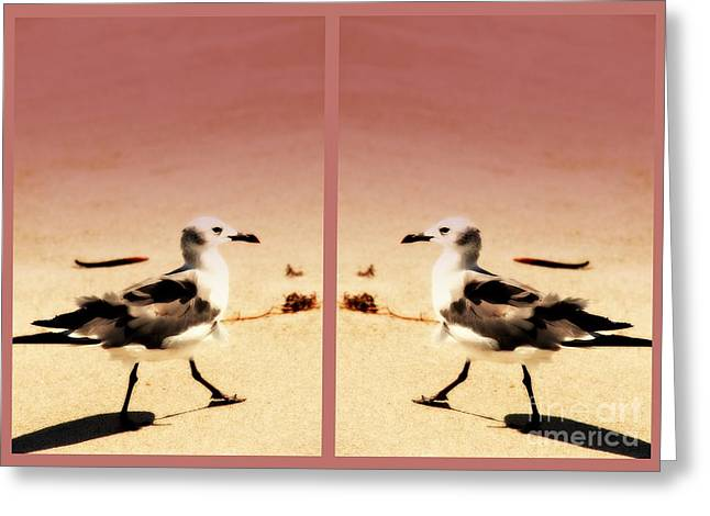 Sea Birds Greeting Cards - Double Gulls Collage Greeting Card by Susanne Van Hulst