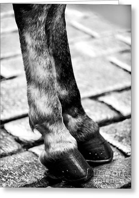 Legs Up Greeting Cards - Double Hooves Greeting Card by John Rizzuto