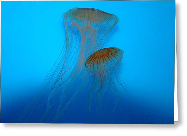 Plankton Greeting Cards - Double Jelly Greeting Card by Quita Jean