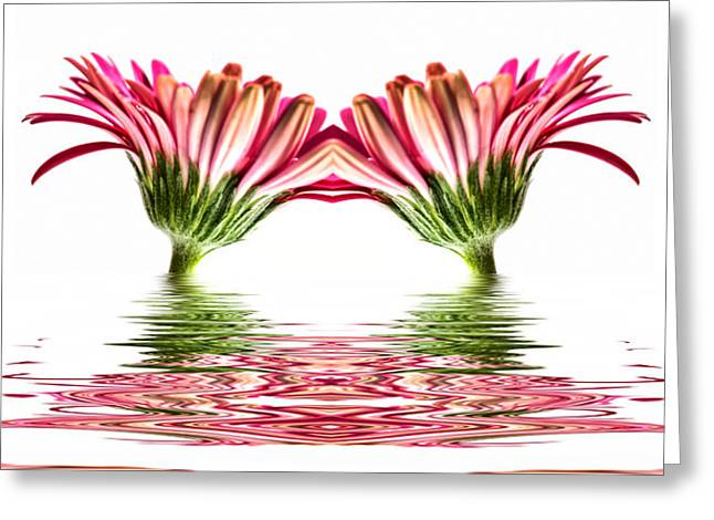 Double Pink Gerbera Flood Greeting Card by Steve Purnell