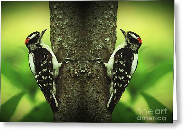 Shelley Myke Greeting Cards - Double Pleasure- Woodpeckers Greeting Card by Inspired Nature Photography By Shelley Myke