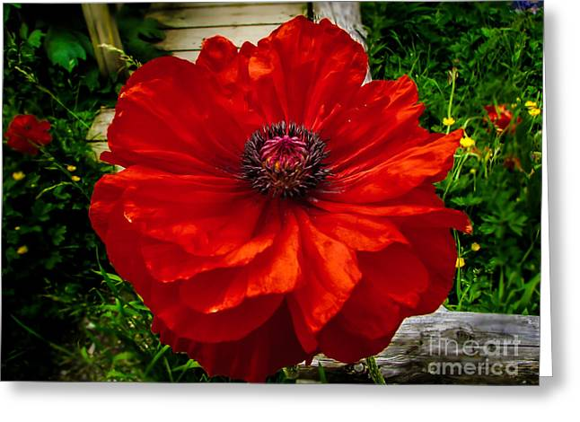 Haybales Greeting Cards - Double Poppy Greeting Card by Robert Bales