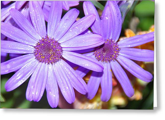 Pretty Flowers Greeting Cards - Double purple Greeting Card by Aimee L Maher Photography and Art