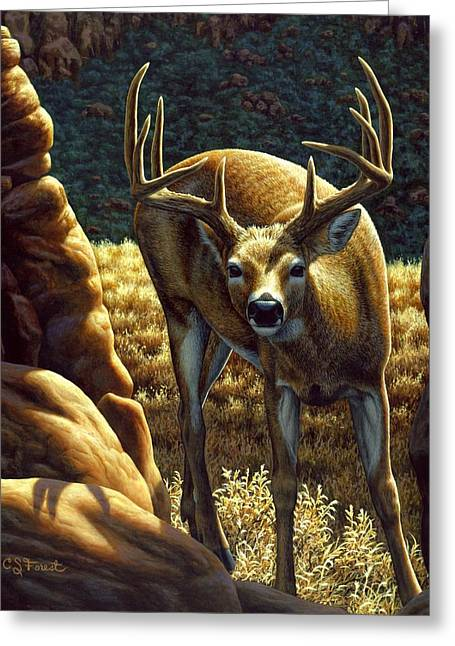 Hunting Greeting Cards - Whitetail Buck - Double Take Greeting Card by Crista Forest