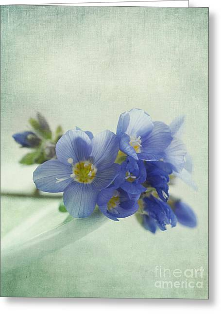Softness Greeting Cards - Douceur Greeting Card by Priska Wettstein